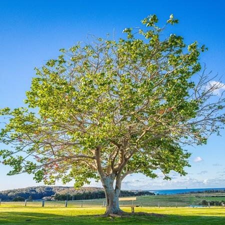 main-tree